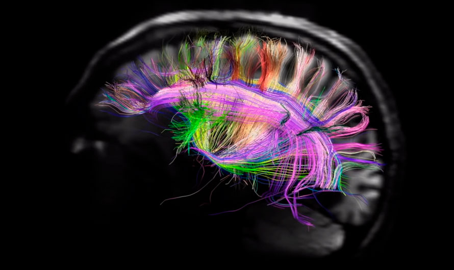 Эмоциональный интеллект руководителя: почему это важно